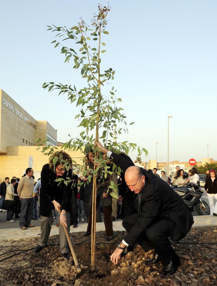 plantación árboles