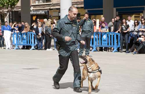 Exhibición: La intervención de canes en la labor policial.. Plaza de la Universidad