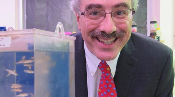 """""""Es importantísimo que los descubrimientos que se hacen en los laboratorios pasen a la industria farmacéutica"""" (Leonard Zon, nuevo doctor Honoris Causa)"""