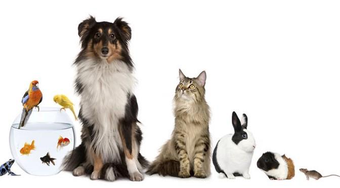 Alumnos de la Universidad de Murcia diseñan una aplicación para calcular la edad de las mascotas