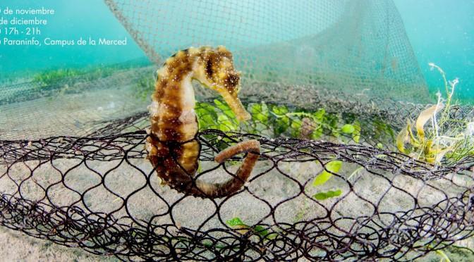 Las Jornadas Pacto por el Mar Menor abordan la problemática de esta laguna