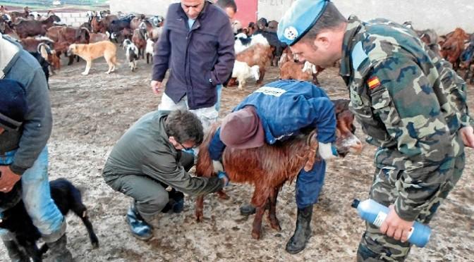 Tres veterinarios de la UMU, en el equipo que viajará a Líbano para intentar mejorar la cabaña ganadera