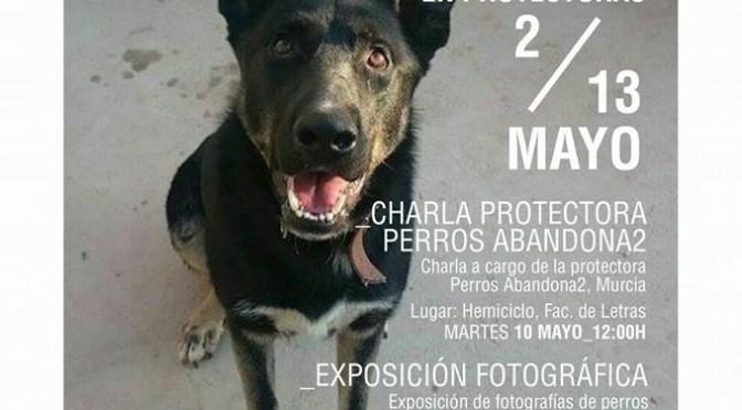 Jornadas informativas sobre el maltrato y el abandono de perros en la Universidad de Murcia