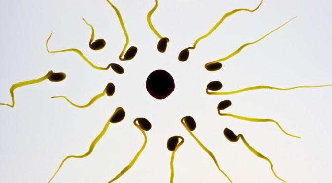 Una investigadora de la UMU descubre un método que sirve tanto para mejorar la fertilidad como para evitarla