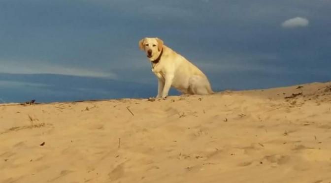 Un titulado de la UMU desarrolla una plataforma web para adoptar animales de protectoras de todo el mundo