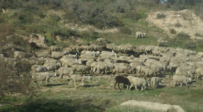 Los participantes del debate sobre vías pecuarias en la UMU instan a la Comunidad Autónoma de Murcia a proteger estos corredores ganaderos