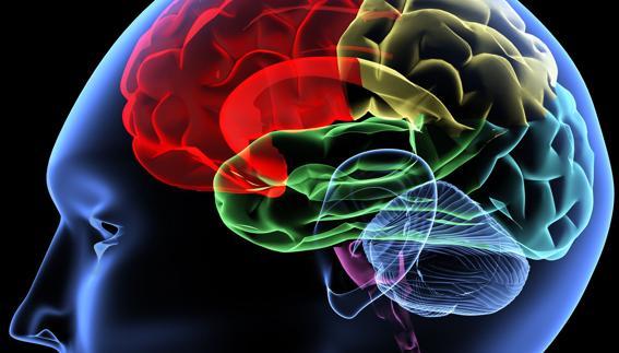"""Un curso de la Universidad del Mar para """"adentrarse"""" en el cerebro del cliente"""