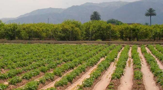Publican un libro sobre la Huerta de Murcia