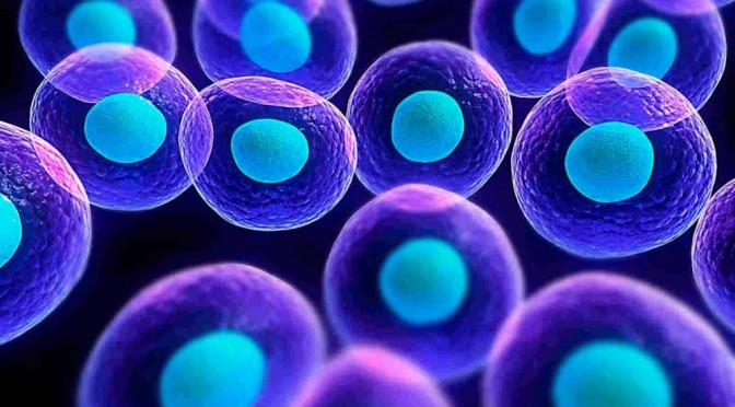 Conferencia sobre células madre en la facultad de Biología