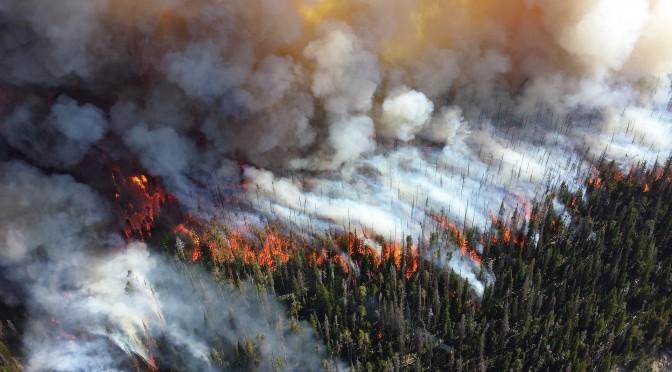 La UMU participa en el desarrollo de un sistema global de predicción estacional de riesgo de incendios basado en su relación con variables climáticas