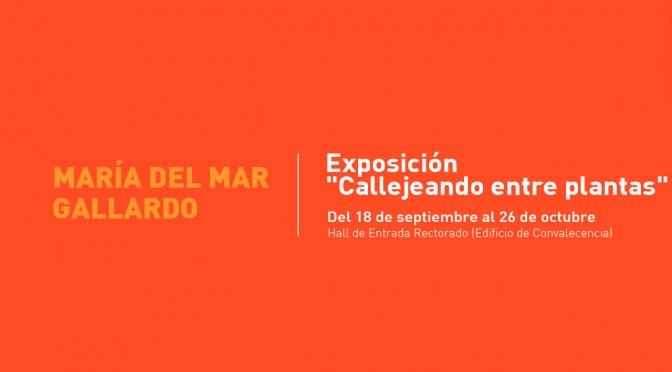 La UMU inaugura una muestra de fotografías dedicada a las calles de Murcia con nombres botánicos