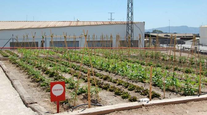 La Universidad de Murcia ofrece 44 parcelas de huertos ecológicos en el Campus de Espinardo