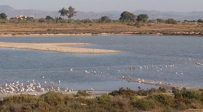 El acuario de la Universidad de Murcia acoge una jornada sobre la conservación de reservas marinas
