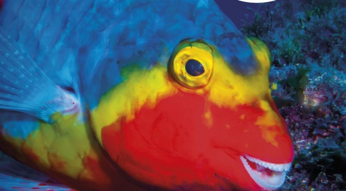 La UMU presenta los resultados de un proyecto que constata los efectos del cambio climático sobre la biodiversidad marina
