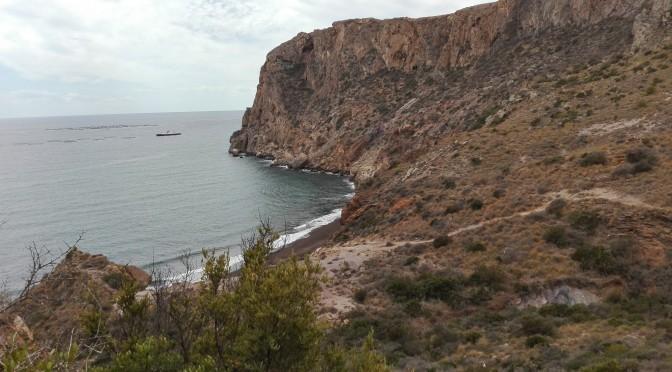 Las aves son actores importantes en la restauración de la vegetación mediterránea, según una investigación de la Universidad de Murcia