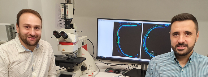 Investigadores de la UMU señalan los posibles beneficios del trasplante de células madre en pacientes con patologías retinianas