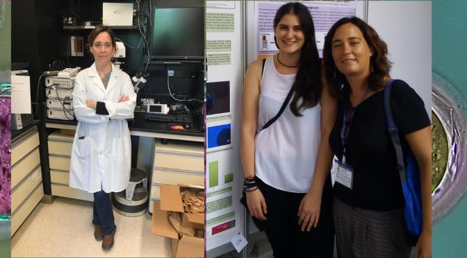 Investigadores de la UMU y el IMIB descubren una proteína del espermatozoide esencial para que ocurra la fecundación