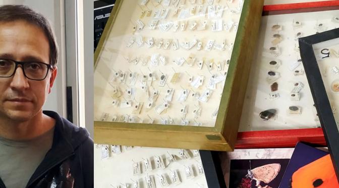 La UMU participa en una investigación que propone sistematizar muestreos para poder estudiar el alcance del declive de los insectos