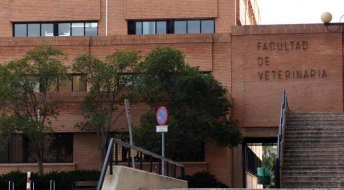 La Facultad de Veterinaria de la UMU está entre los cinco mejores centros del país de su área, según el Ranking CYD